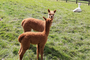 New Baby cria arrive