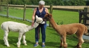 side-alpaca-adoption